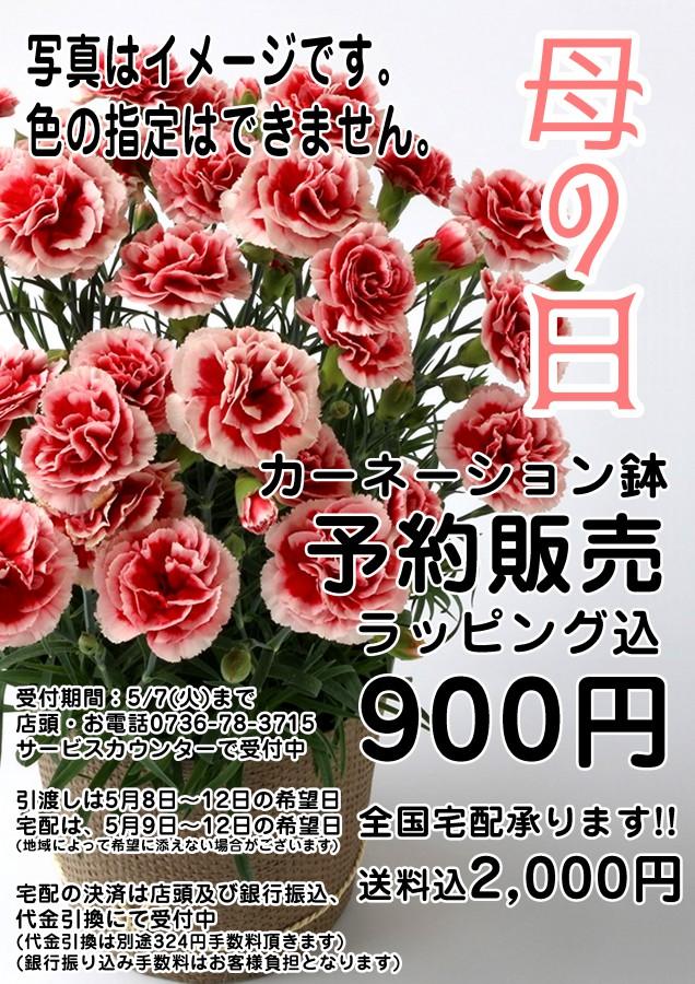 カーネーション予約 copy