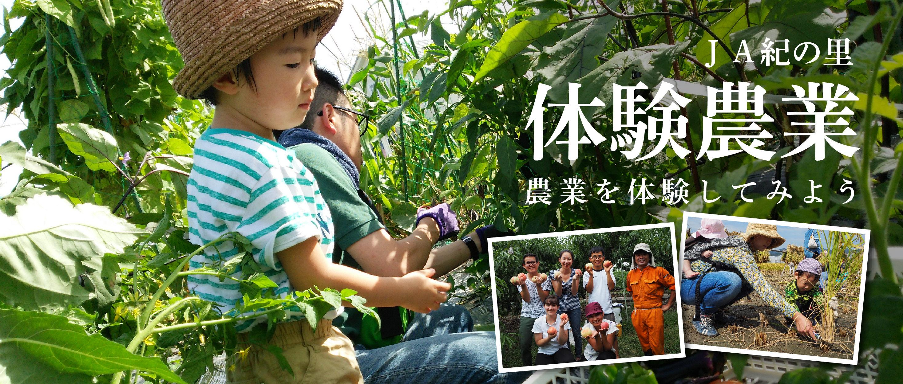 JA紀の里 体験農業 農業を体験してみよう