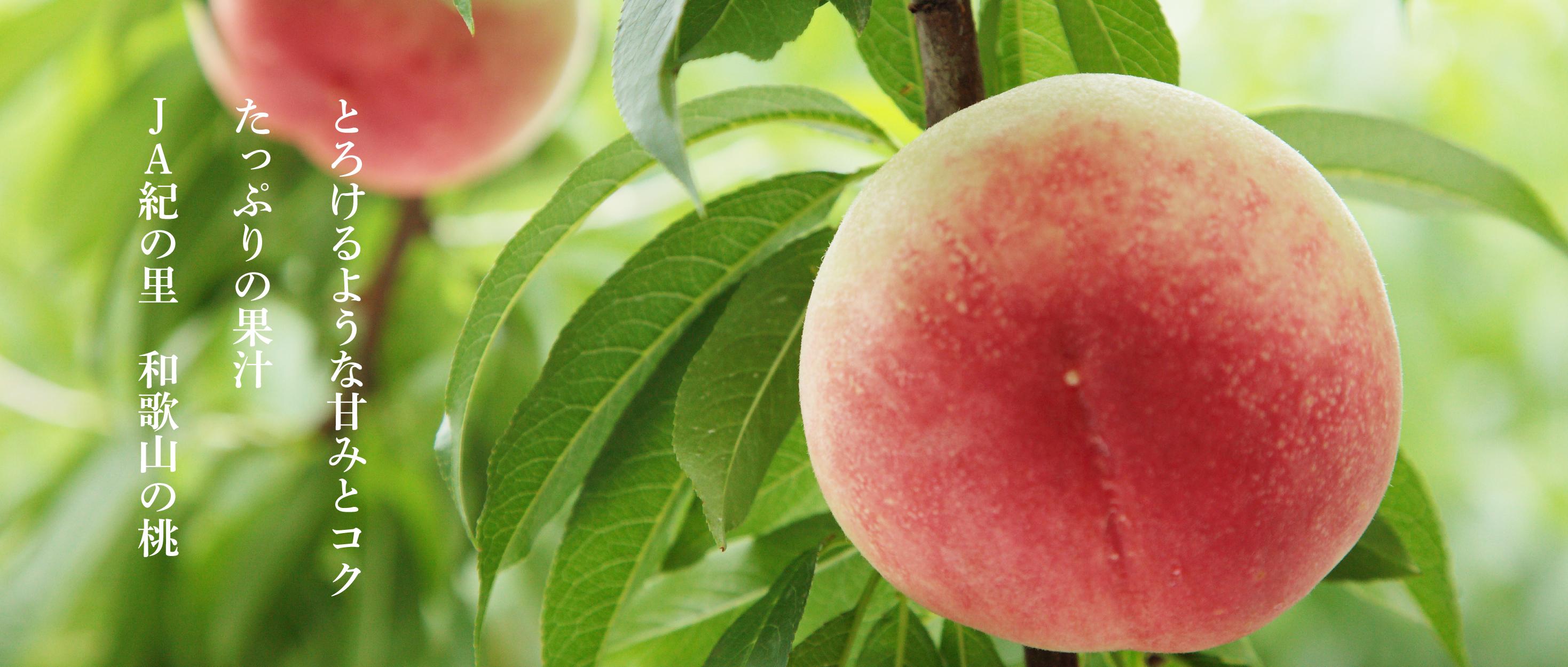 とろけるような甘みとコクたっぷりの果汁JA紀の里和歌山の桃